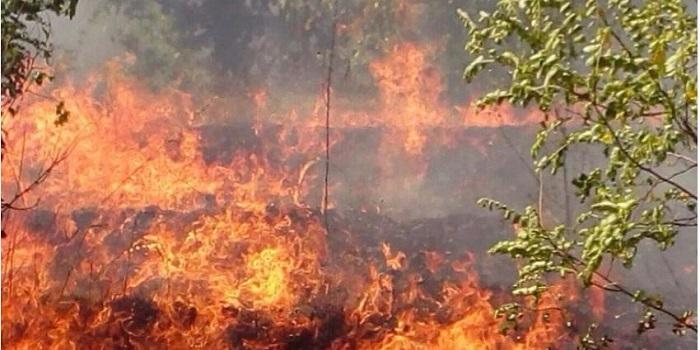 В Херсонской области масштабный лесной пожар Подробнее читайте на Юж-Ньюз: http://xn----ktbex9eie.com.ua/archives/8077