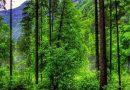 Как защититься от клещей на даче и на природе Подробнее читайте на Юж-Ньюз: http://xn----ktbex9eie.com.ua/archives/6950