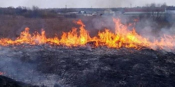 В Херсонской области горит уже 100 га леса: николаевские спасатели поехали на подмогу Подробнее читайте на Юж-Ньюз: http://xn----ktbex9eie.com.ua/archives/8224