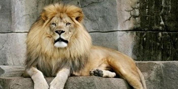 В тернопольском зоопарке лев напал на мальчика Подробнее читайте на Юж-Ньюз: http://xn----ktbex9eie.com.ua/archives/8542