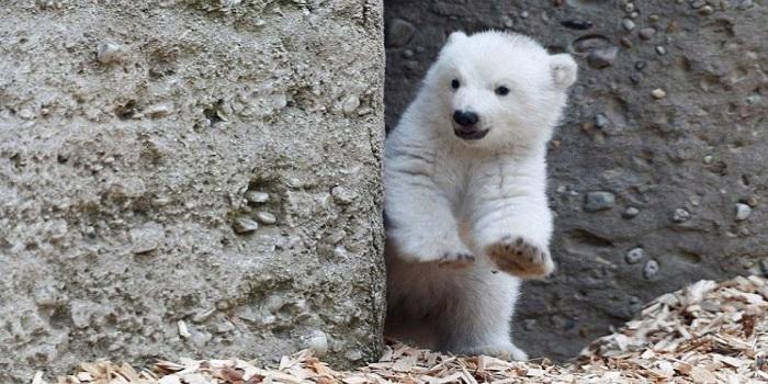 В Николаевском зоопарке показали как резвится маленький белый медведь. ВИДЕО Подробнее читайте на Юж-Ньюз: http://xn----ktbex9eie.com.ua/archives/10604