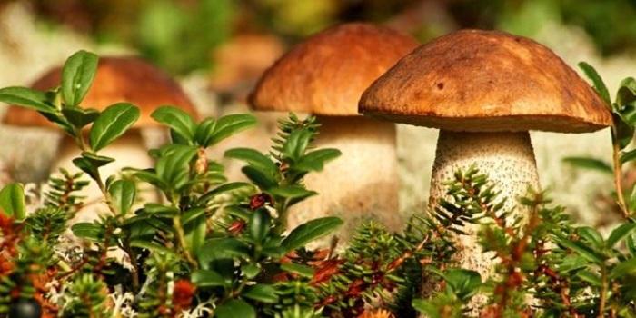 Страшная тоагедия. Под Одессой семья отравилась грибами: умерла беременная женщина и 11-летний мальчик Подробнее читайте на Юж-Ньюз: http://xn----ktbex9eie.com.ua/archives/15267