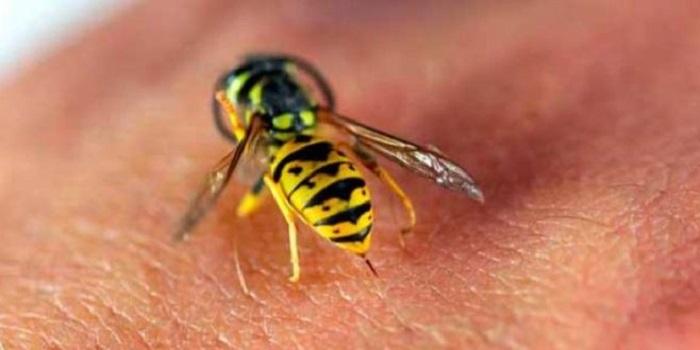 Что делать, если ужалили оса, пчела или шершень Подробнее читайте на Юж-Ньюз: http://xn----ktbex9eie.com.ua/archives/16294