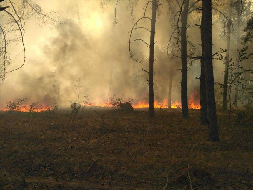 В Вознесенском районе возник масштабный лесной пожар. Фото, видео  Подробнее читайте на Юж-Ньюз: http://xn----ktbex9eie.com.ua/archives/17962