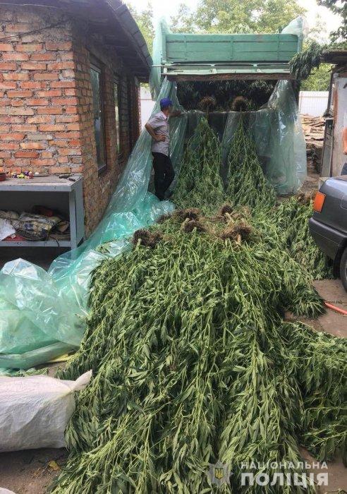 «Выращивал для кроликов»: в Арбузинском районе у мужчины изъяли конопли на 12 млн грн Подробнее читайте на Юж-Ньюз: http://xn----ktbex9eie.com.ua/archives/17933