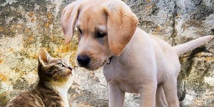 Согласно новому закону, за издевательства над животными можно получить до восьми лет лишения свободы Подробнее читайте на Юж-Ньюз: http://xn----ktbex9eie.com.ua/archives/17801