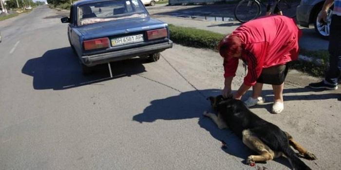 В Винницкой области привязанную к такси собаку протащили через весь город Подробнее читайте на Юж-Ньюз: http://xn----ktbex9eie.com.ua/archives/22361