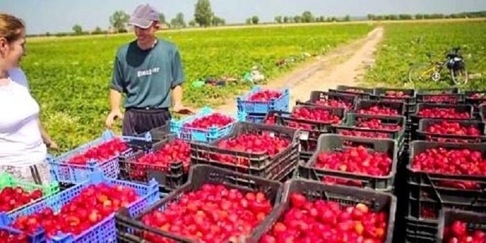 Работа в Польше: Сколько зарабатывают украинцы Подробнее читайте на Юж-Ньюз: http://xn----ktbex9eie.com.ua/archives/20497