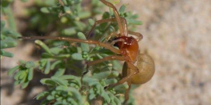 Новый вид опасных пауков обнаружили в Одесской области (фото) Подробнее читайте на Юж-Ньюз: http://xn----ktbex9eie.com.ua/archives/21727