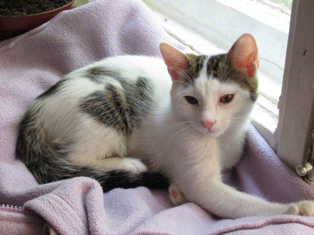 Смертоносні котики: 5 небезпечних хвороб, які передають нам домашні улюбленці  Подробнее читайте на Юж-Ньюз: http://xn----ktbex9eie.com.ua/archives/20221