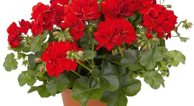 Три комнатных растения, улучшающих здоровье  Подробнее читайте на Юж-Ньюз: http://xn----ktbex9eie.com.ua/archives/26585