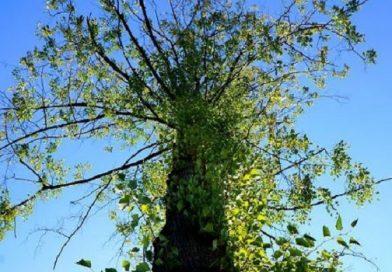 Голосуем за присвоение «Почетного гражданина» дедушке, высадившему 20 тысяч деревьев в Николаеве. Инициатива губернатора