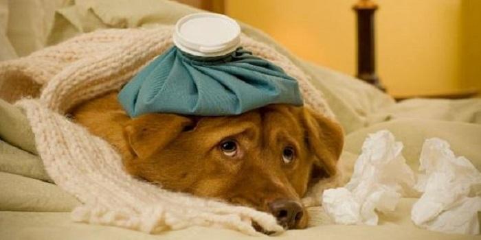 Проверенные советы — Как уберечься от простуды без таблеток Подробнее читайте на Юж-Ньюз: http://xn----ktbex9eie.com.ua/archives/25698