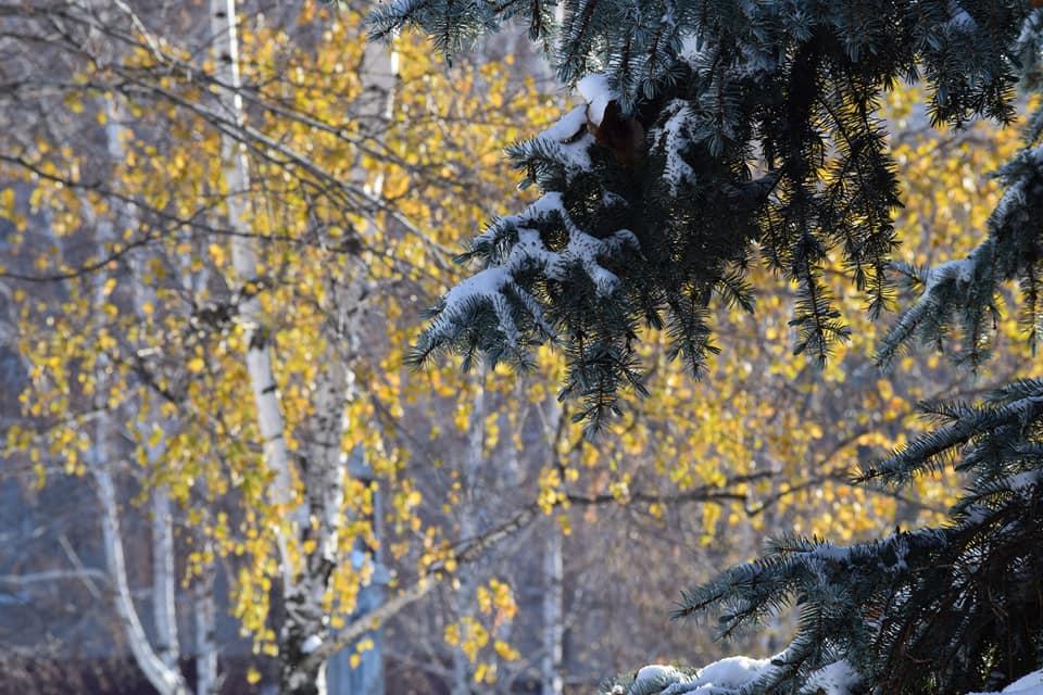 Южноукраинск. Зимняя сказка. Фото. Подробнее читайте на Юж-Ньюз: http://xn----ktbex9eie.com.ua/archives/31915
