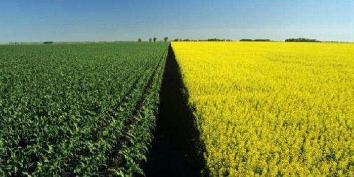 Мораторий на продажу земли продлили на год Подробнее читайте на Юж-Ньюз: http://xn----ktbex9eie.com.ua/archives/34014