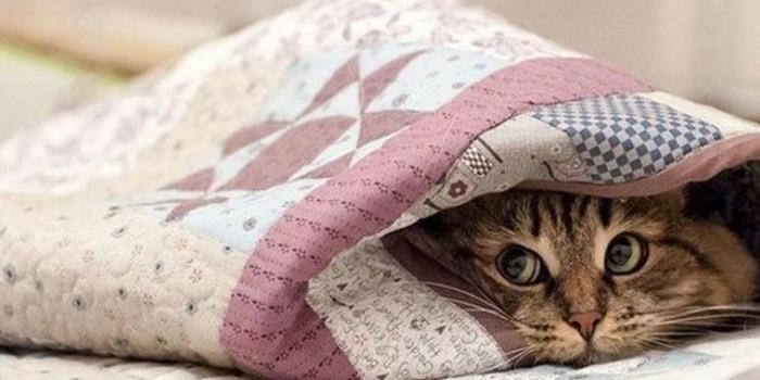 На территории Николаевской области ночью синоптики обещают резкое похолодание Подробнее читайте на Юж-Ньюз: http://xn----ktbex9eie.com.ua/archives/37536
