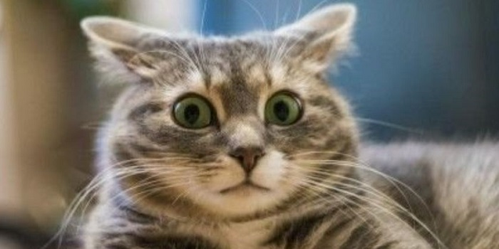 Во Львове полиция возбудила уголовное дело из-за выброшенного с 9 этажа кота Подробнее читайте на Юж-Ньюз: http://xn----ktbex9eie.com.ua/archives/37558