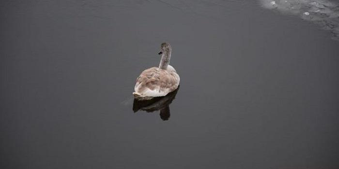 Спасенного лебедя, поселившегося у моста в Николаеве, доставили в зоопарк. Фото. Подробнее читайте на Юж-Ньюз: http://xn----ktbex9eie.com.ua/archives/36000