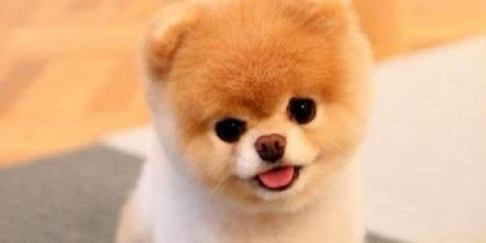 В США умерла «самая милая собака» в мире. Фото. Подробнее читайте на Юж-Ньюз: http://xn----ktbex9eie.com.ua/archives/37602