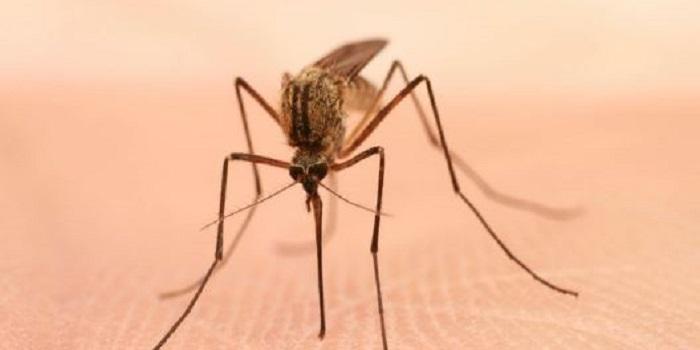 Во Львове у мужчины обнаружили страшную африканскую болезнь Подробнее читайте на Юж-Ньюз: http://xn----ktbex9eie.com.ua/archives/35776