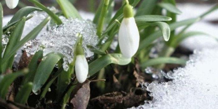 Весна придет скоро: синоптики озвучили оптимистичный прогноз Подробнее читайте на Юж-Ньюз: http://xn----ktbex9eie.com.ua/archives/41018