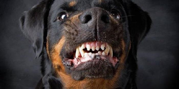 Полиция ищет владельца собаки, которая насмерть загрызла девушку в Вознесенске Подробнее читайте на Юж-Ньюз: http://xn----ktbex9eie.com.ua/archives/41581