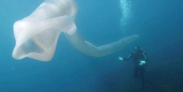 Дайверы обнаружили неизвестного монстра: 8 метров ужаса извиваются и плавают. Фото, видео  Подробнее читайте на Юж-Ньюз: http://xn----ktbex9eie.com.ua/archives/39908