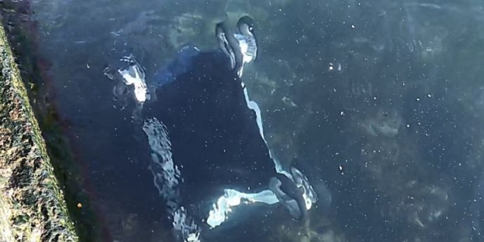 В Одессе мать бросилась в море за коляской, которую вместе с ребёнком унесло ветром — обоих вытащил прохожий Подробнее читайте на Юж-Ньюз: http://xn----ktbex9eie.com.ua/archives/43994