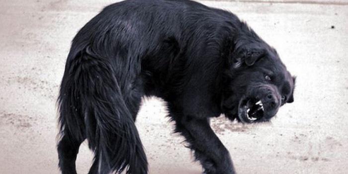 АЧС, бешенство и трихинеллез: на Николаевщине бушуют заразные болезни животных Подробнее читайте на Юж-Ньюз: http://xn----ktbex9eie.com.ua/archives/48571