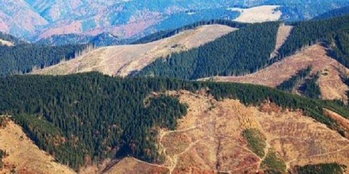 В Україні закривають кримінальні справи про незаконну вирубку лісу через ухвалений депутатами закон Подробнее читайте на Юж-Ньюз: http://xn----ktbex9eie.com.ua/archives/46995
