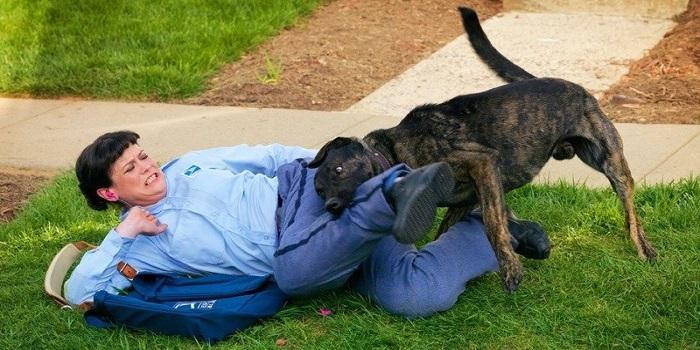 Под Херсоном стая бродячих собак растерзала 17-летнюю девушку Подробнее читайте на Юж-Ньюз: http://xn----ktbex9eie.com.ua/archives/50901