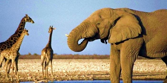 В зоопарке Николаева скоро поселятся слоны и жирафы Подробнее читайте на Юж-Ньюз: http://xn----ktbex9eie.com.ua/archives/53631