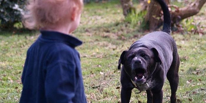 Под Харьковом злой пес сорвался с цепи и укусил за голову маленькую девочку. ВИДЕО Подробнее читайте на Юж-Ньюз: http://xn----ktbex9eie.com.ua/archives/54710