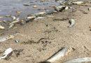 В Южном Буге зафиксирован массовый мор рыбы (ФОТО) Подробнее читайте на Юж-Ньюз: http://xn----ktbex9eie.com.ua/archives/59515