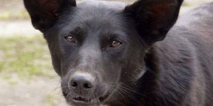 В Южноукраинске агрессивная собака нападает на людей Подробнее читайте на Юж-Ньюз: http://xn----ktbex9eie.com.ua/archives/59175
