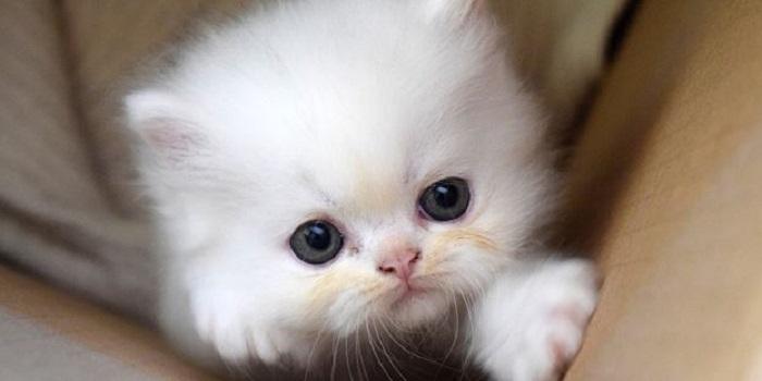 В Днепре неизвестные подожгли коробку с маленькими котятами Подробнее читайте на Юж-Ньюз: http://xn----ktbex9eie.com.ua/archives/59233
