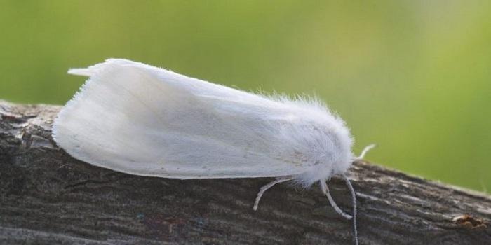На Николаевщине объявлен карантин из-за американской белой бабочки Подробнее читайте на Юж-Ньюз: http://xn----ktbex9eie.com.ua/archives/61908