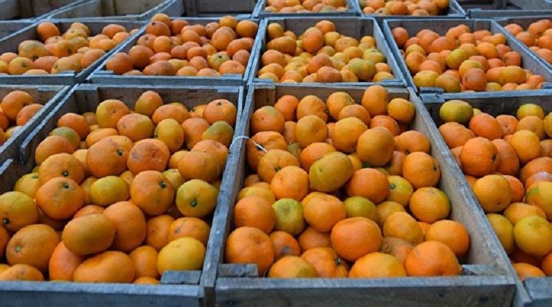 В Украине появились мандарины собственного производства Подробнее читайте на Юж-Ньюз: http://xn----ktbex9eie.com.ua/archives/68598