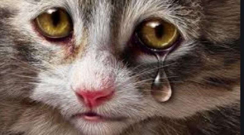 Южноукраинск — Новогодний фуршет на 90 тысяч гривен недоедающим руководителям, а животные все равно помои поедят. — Олександр Надьожа Подробнее читайте на Юж-Ньюз: http://xn----ktbex9eie.com.ua/archives/69523