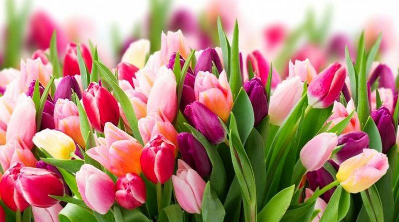 Вітання з 8 березня — Южноукраїнськ, міська рада Подробнее читайте на Юж-Ньюз: http://xn----ktbex9eie.com.ua/archives/74195