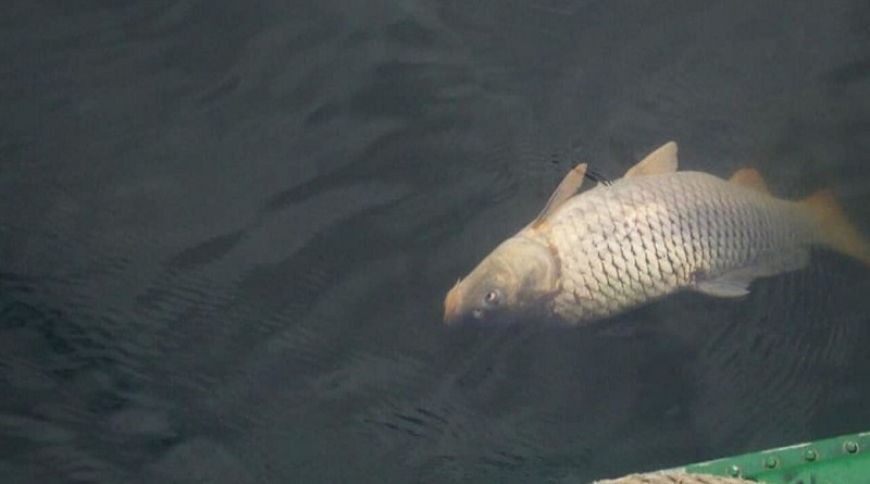 На реке Мертвовод на Николаевщине зафиксирован массовый мор рыбы Подробнее читайте на Юж-Ньюз: http://xn----ktbex9eie.com.ua/archives/81016/%D0%BD%D0%B0-%D1%80%D0%B5%D0%BA%D0%B5-%D0%BC%D0%B5%D1%80%D1%82%D0%B2%D0%BE%D0%B2%D0%BE%D0%B4-%D0%BD%D0%B0-%D0%BD%D0%B8%D0%BA%D0%BE%D0%BB%D0%B0%D0%B5%D0%B2%D1%89%D0%B8%D0%BD%D0%B5-%D0%B7%D0%B0%D1%84