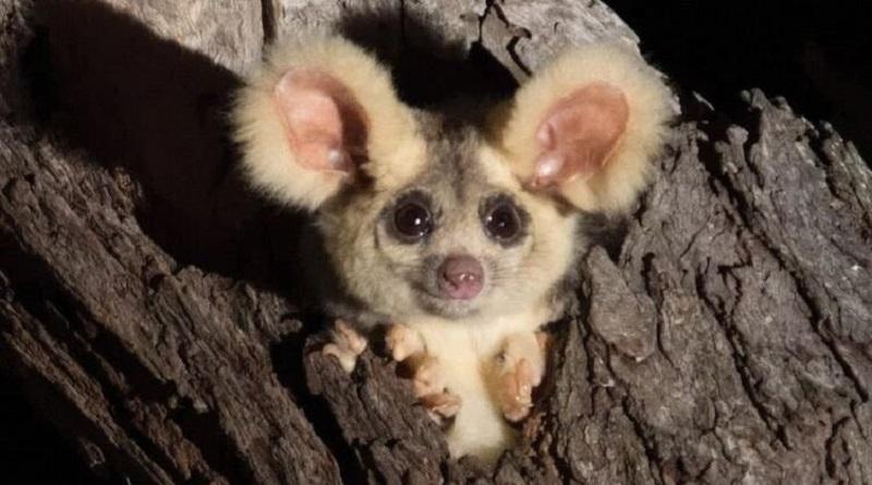 В Австралии исследовали обнаружили два новых вида животных. Фото