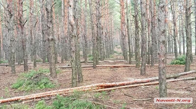 Вырубка леса в Николаеве: полиция открыла производство