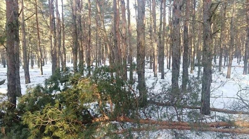 В Матвеевке рубят лес: жители пятый день защищают деревья