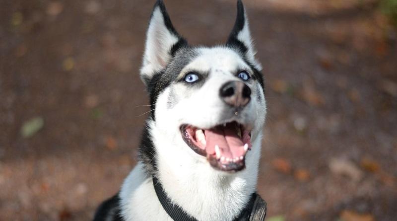 В Одеській області врятували собаку від шкуродера (фото, відео).
