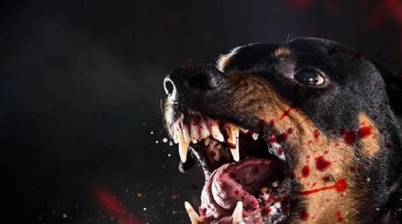«Откусила кусок голени»: в Николаеве собака напала на бабушку