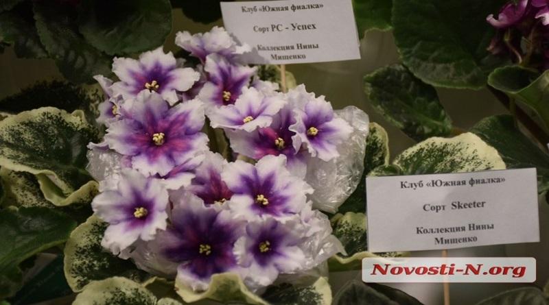 В Николаеве прошла выставка фиалок и кактусов. ФОТОРЕПОРТАЖ