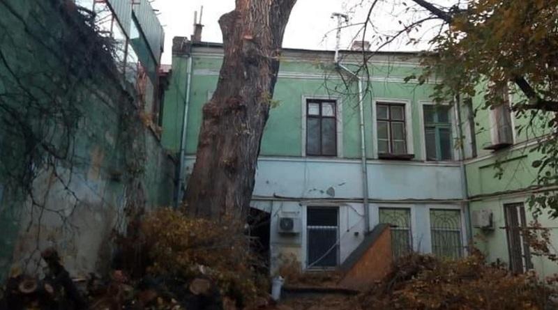 """В Одессе спилили """"Пушкинский тополь"""", директору ОСМД грозит до трех лет тюрьмы"""