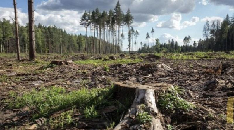 Жителю Николаевской области грозит 7 лет тюрьмы за незаконную вырубку деревьев