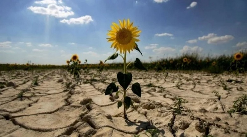 Украинский чернозем становится непригодным для земледелия: тревожный прогноз